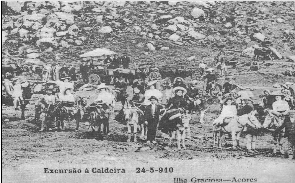 Burro anão da graciosa 1910